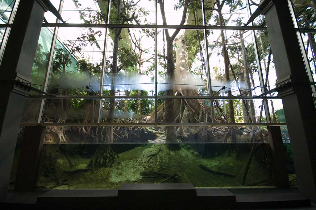 The flooded rainforest, recreated at Cosmo Caixa in Barcelona